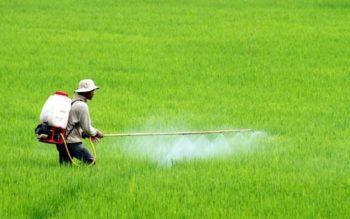 Khảo nghiệm thuốc bảo vệ thực vật