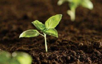Kỳ họp thứ 6, Quốc hội khóa XIV: Quản lý chặt việc sử dụng phân bón và giống cây trồng