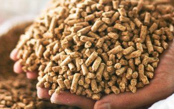 Quy định và xử lý thức ăn chăn nuôi không đạt chất lượng