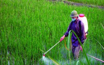 Nguyên tắc chung về thực hiện khảo nghiệm thuốc bảo vệ thực vật