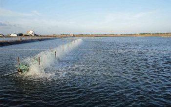 Thủ tục công nhận kết quả khảo nghiệm giống thủy sản
