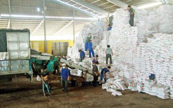 117 vụ vi phạm trong sản xuất, gia công phân bón vô cơ bị xử lý