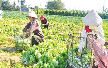 Luật trồng trọt: Khắc phục bất cập trong quản lý phân bón