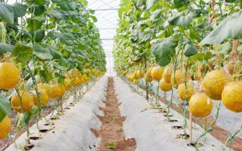 Thủ tục Tiếp nhận bản công bố hợp quy giống cây trồng