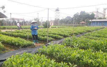 Thủ tục Cấp phép nhập khẩu giống cây trồng chưa được cấp quyết định công nhận lưu hành